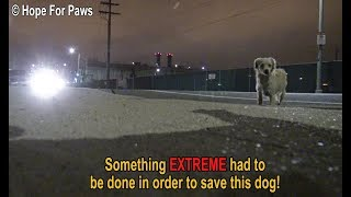 Download Something EXTREME had to be done in order to save this homeless dog. DON'T BLINK or you'll miss it! Video