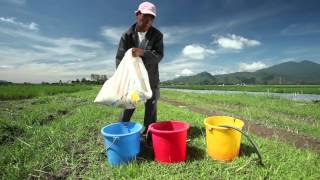 Download Global Information System on Plant Genetic Resources for Food and Agriculture Video