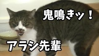 Download 母を訪ねて鬼鳴きする猫 Video