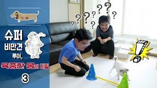Download 세상에 나쁜 개는 없다 - 슈퍼 비만견 루이, 육중한 몸의 비밀 #003 Video