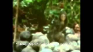 Download The ″Flores Man ″: nicknamed the ″ Hobbit ″ ! Video