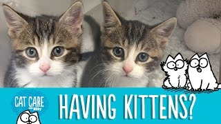 Download Simon's Cat Care: Should You Get A Kitten? Video