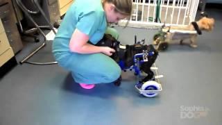 Download Lascar being rehabilitated utilizing Kerdog Video