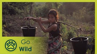 Download Laos Wonderland (full documentary) - The Secrets of Nature Video