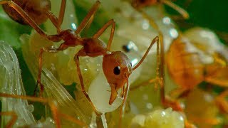 Download Ants in Agriculture | Earth Unplugged Video