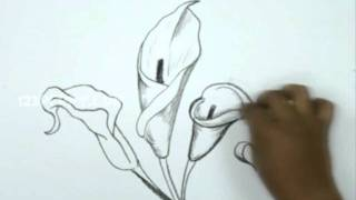 Download How to Draw a Calla Lily Video