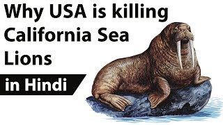 Download California Sea Lions euthanized to protect migrating fish, Is human interference good for nature? Video