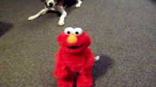 Download Tickle Me Elmo X TMX Elmo Video