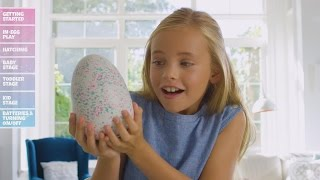 Download Hatchimals Disappoint Many Families Who Say Hyped-Up Toys Didn't Hatch Video