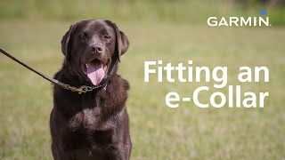 Download Garmin: Fitting an e-Collar and Finding Your Dog's Level Video