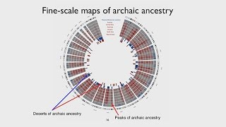 Download CARTA: Ancient DNA and Human Evolution – The Landscape of Archaic Ancestry in Modern Humans Video