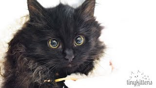 Download LIVE: Rescued pregnant feral cat + kittens - TinyKittens Video