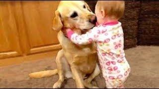 Download REAL HERO PETS WHO SAVE HUMAN LIFE   देखिये ऐसे जानवर जिन्होंने बचायी इंसानो की जान Video