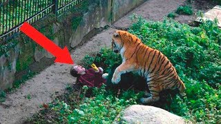 Download Most Shocking Moments Caught At The Zoo Video