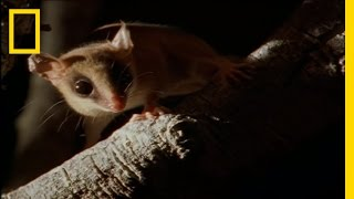 Download Bats by Night | Wild Detectives Video
