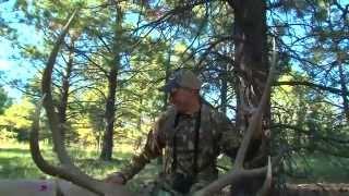 Download Rage Hypodermic Broadhead Puts Elk Down in 60 yards! Video