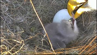 Download AEF-NEFL ~ Breakfish Is Served ~ Juliet Feeds NE18 For First Time 12.10.17 Video