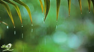 Download Relaxing Music & Rain Sounds - Beautiful Piano Music, Background Music, Sleep Music Video