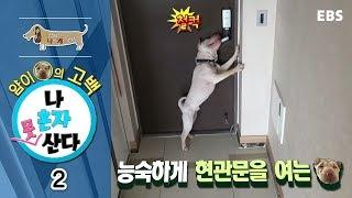 Download 세상에 나쁜 개는 없다 - 얌이의 고백, 나 혼자는 못 산다 #002 Video