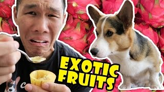 Download COMPARING EXOTIC FRUITS From Around the WORLD - Life After College: Ep. 503 Video