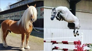 Download Cute And funny horse Videos Compilation cute moment of the horses Cutest Horse #15 Video