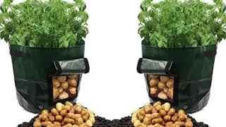 Download Tenha batatas o ano inteiro - plante em um saco de lixo Video