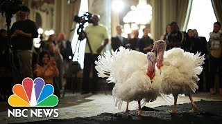 Download President Donald Trump Leads Turkey Pardoning At White House | NBC News Video