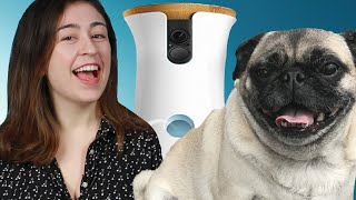Download People Spied On Their Dogs With A Camera For A Day Video