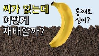 Download 바나나는 씨가 없는데 어떻게 재배할까?|바나나에 숨겨진 놀라운 사실 Top3 Video