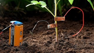 Download Growing tomatoes this summer? Try this to keep snails away! Video