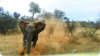 Download Elephant ATTACKS Safari Jeep | EXCLUSIVE Footage [Never Before Seen] Video
