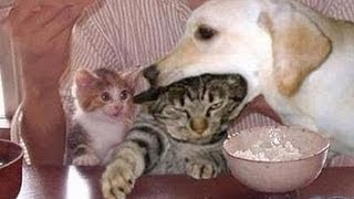 Download Funny dogs annoying cats - Cute animal compilation Video