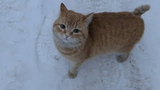 Download 5 cats on the street on a snowy day Video