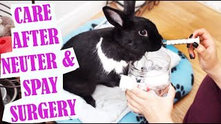 Download How to Care for your Bunny after Spay/Neuter Surgery! Video
