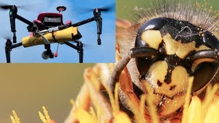 Download CAUGHT ON CAMERA: Hornet's nest sliced by drone! Video