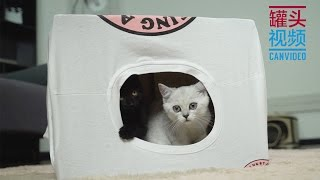 Download 【CanPet】DIY cat tent from old T-shirt & Paper box Video