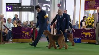 Download Airedale Terriers | Breed Judging 2019 Video