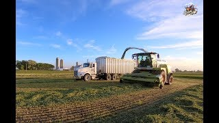 Download Chopping Rye at Next Generation Dairy Farm - Berne Indiana Video