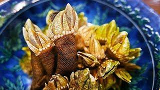 Download Japanese Street Food - TURTLE HANDS Barnacle Tempura Okinawa Seafood Japan Video