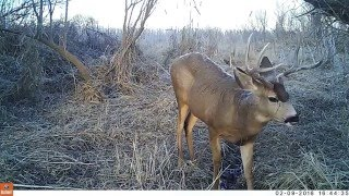 Download River Bottom Trail Cam Video Video