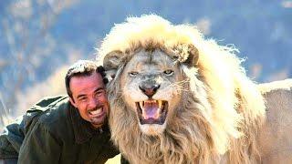 Download Невероятная Дружба Людей И Хищных Животных Video