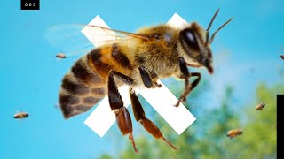 Download Bees are going extinct...but not the ones you think Video