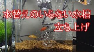 Download 水替えのいらない水槽立ち上げ 【ブルカミア】 Video