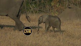 Download safariLIVE - Sunset Safari - June 25, 2019 Video