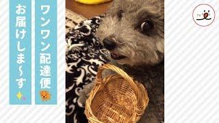 Download 飼い主さんのお遣いを上手にできる賢いワンコ 🐶✨【PECO TV】 Video