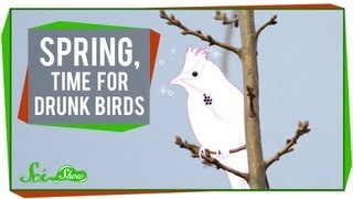 Download Spring, Time for Drunk Birds Video