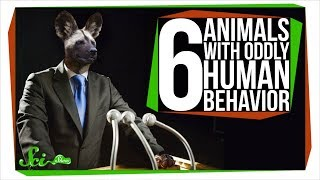 Download 6 Animals with Oddly Human Behavior Video