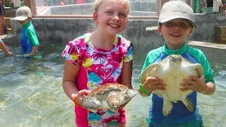 Download Grand Cayman Turtle Experience - Holding & Swimming with Turtles!! Video