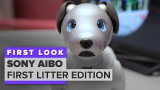 Download We played with Aibo: Sony's $2,899 robot dog Video