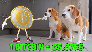 Download Dogs Vs Funny Bitcoin Animation in Real Life! Video